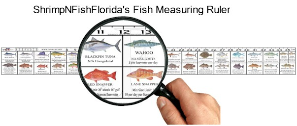 ShrimpNFishFlorida's Fish Measuring Ruler