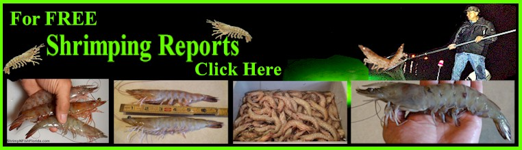 FREE Shrimping Reports