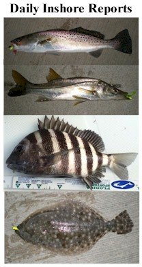 Florida inshore saltwater fish identification for Florida saltwater fish species