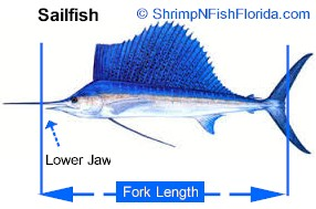 How to measure a Billfish Measurements