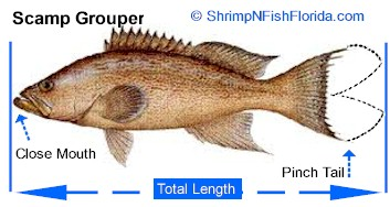 Hot To Measure A Fish's Total Length