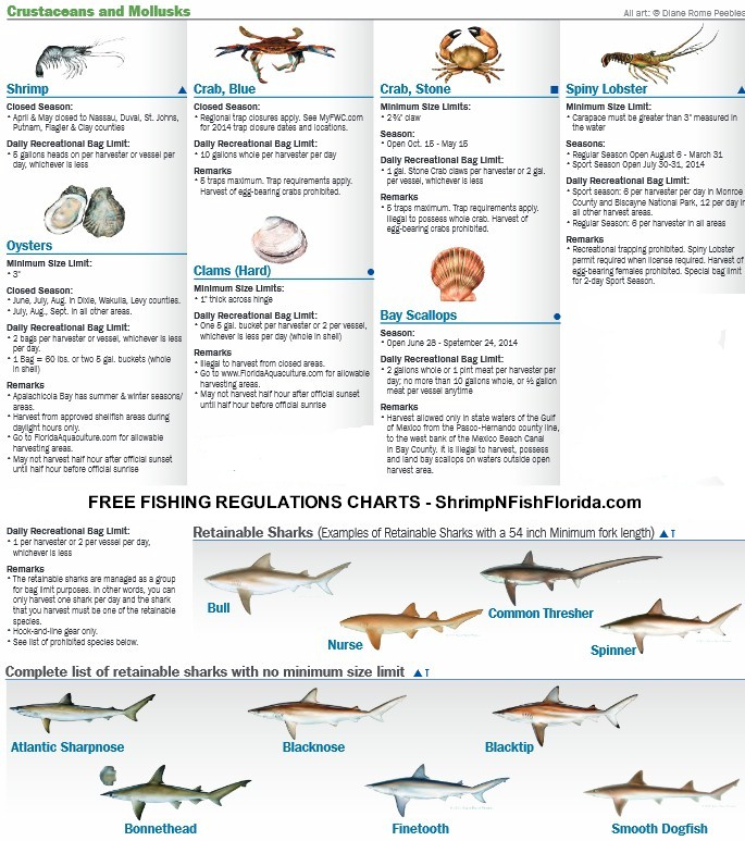 fwc regulations florida fising regulations